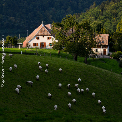 One the picturesque farms in the Silver Valley (Val d'Argent)